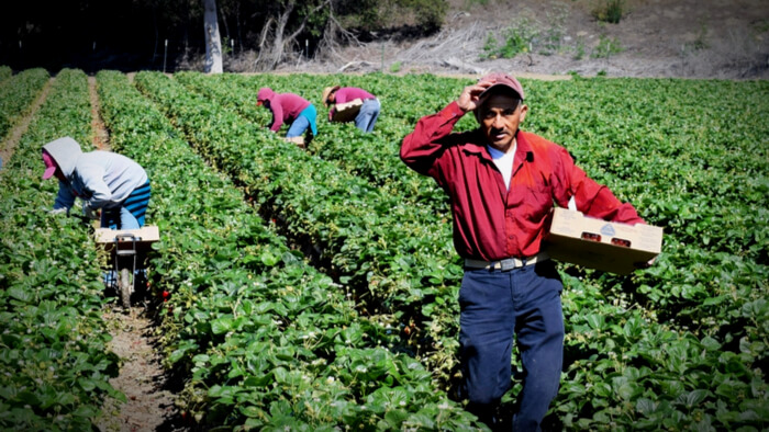 Climate Change Effects on Agricultural Workers