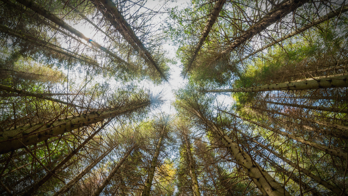 Natural Capital: A Movement To Show Nature Is Worth More Alive Than Dead Giving Compass