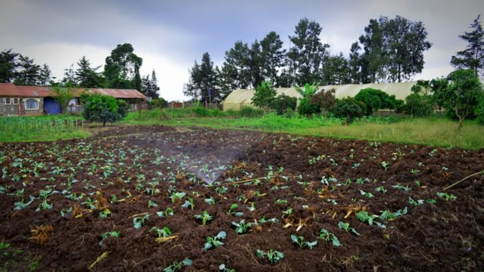 Delivering More for Kenyan Farmers Giving Compass