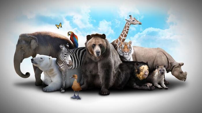 wild-animal-suffering