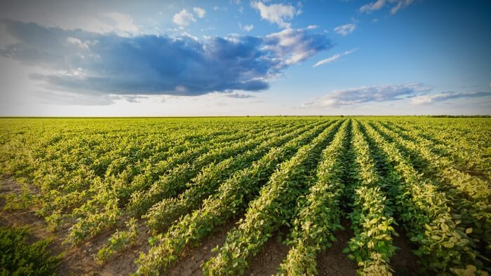 Intensive Agriculture Drives Midwest Climate Changes · Giving Compass