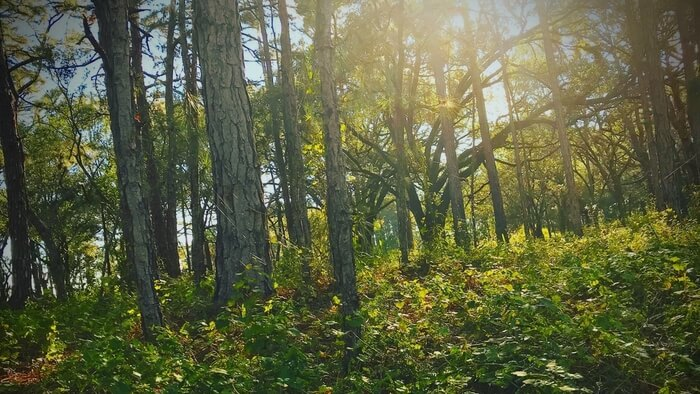 Investing in Forest Restoration-giving compass