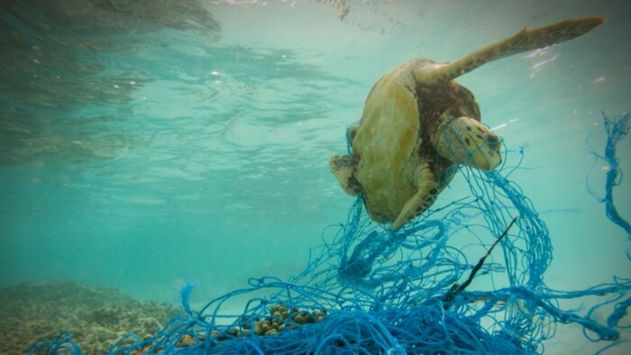 What Can Donors Do About Ocean Plastic? Giving Compass