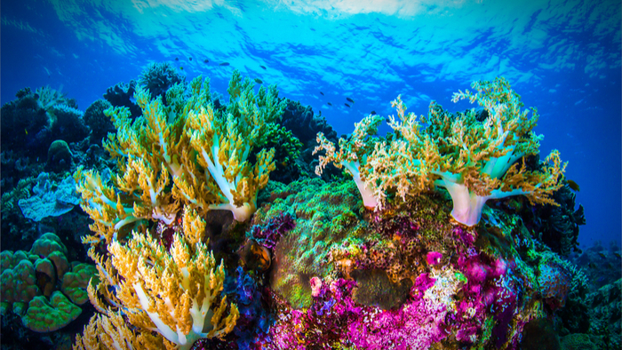 Coral-reef-refuge-climate-change