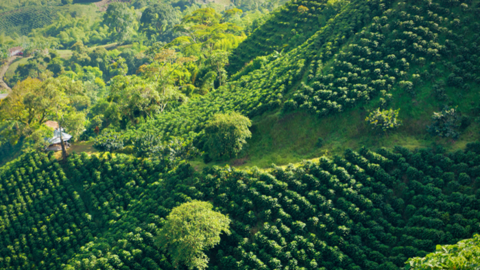 Climate Change Threatens Colombian Coffee Farmers Giving Compass