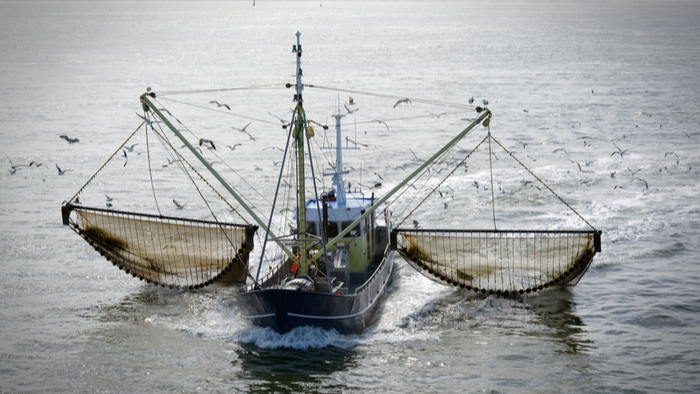 Inefficient Practices Lead to Nearly 50 Million Tons of Fish Wasted Every Year Giving Compass