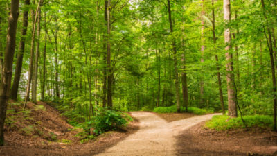 Josh Mailman For-Profit or Nonprofit? Giving Compass