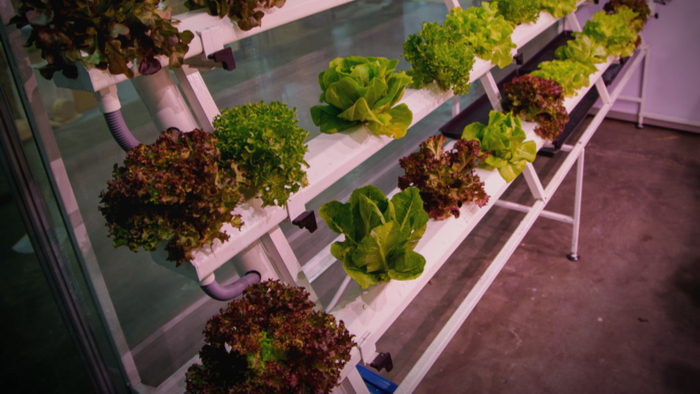 Going Beyond Organic with Vertical Hydroponic Farming Giving Compass