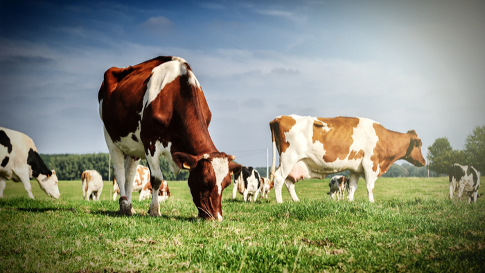 Animal-welfare-volunteering