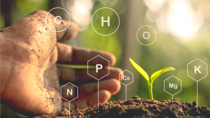 Soil Minerals Hang on to a Whole Lot of Carbon