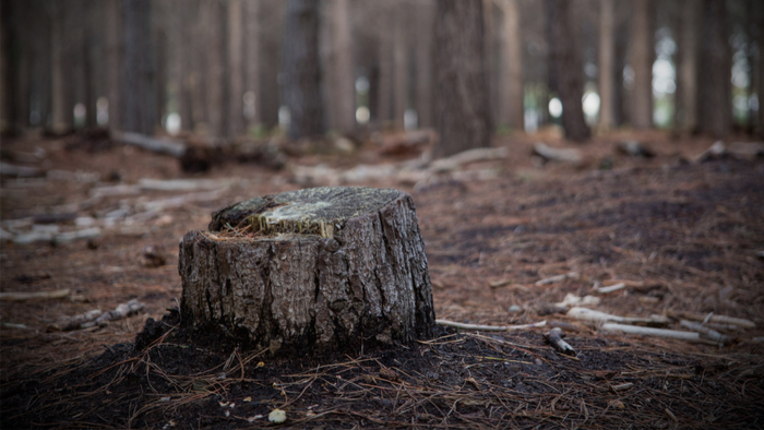 Deforestation Has Surprising Effect on Clean Water Giving Compass