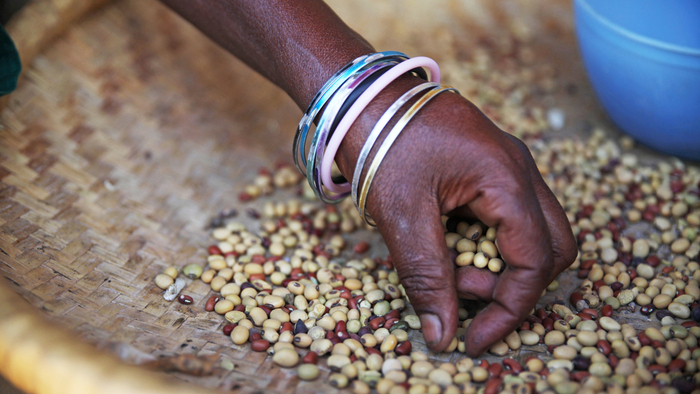 Traditional Crops in Western Africa Are at Risk from Outdated Seed Laws
