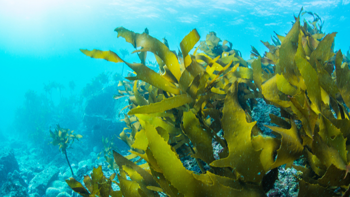 This Organization Works to Restore Oceans all over the Globe while Creating Jobs and a Market for Seaweed