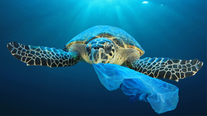 How the SDGs Can Help Fight Plastic Pollution