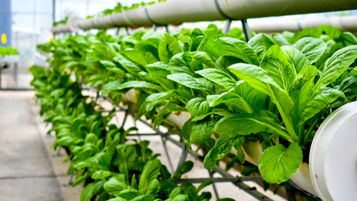 Urban Farm Grows Good Food and Good Mental Health