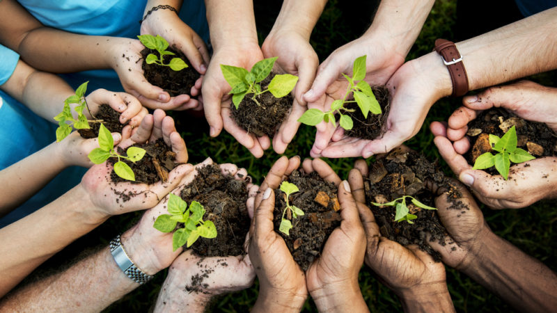 City Growers Gives Kids An Opportunity To Explore Sustainable Agriculture Giving Compass