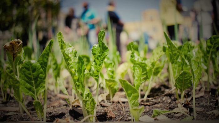 Growing Environmental Justice Advocates Through Community Gardens Giving Compass