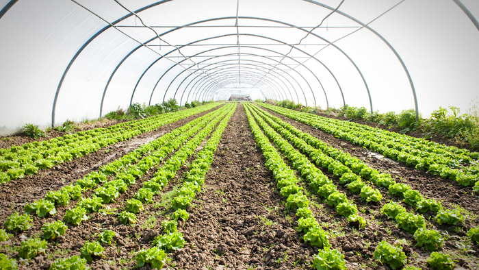 The Plastic Problem In Organic Farming Giving Compass
