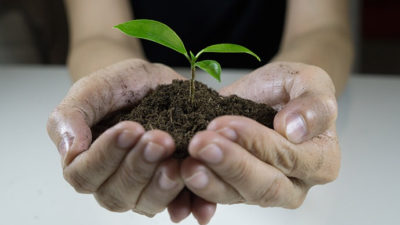 Two hands holding a pile of dirt with a sprout growing out of the middle.