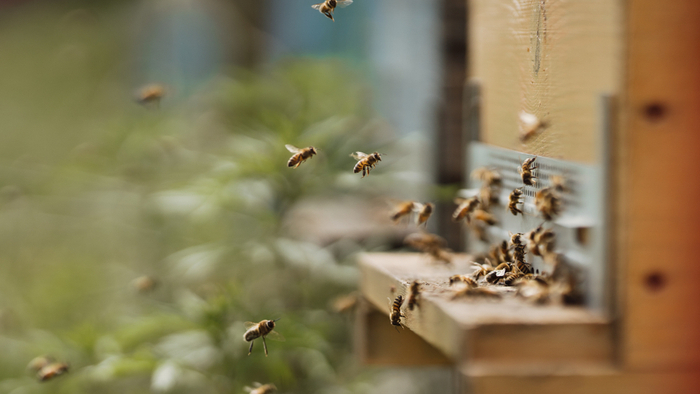 New Study Shows Bee-Killing Neonicotinoids Build Up in Environment