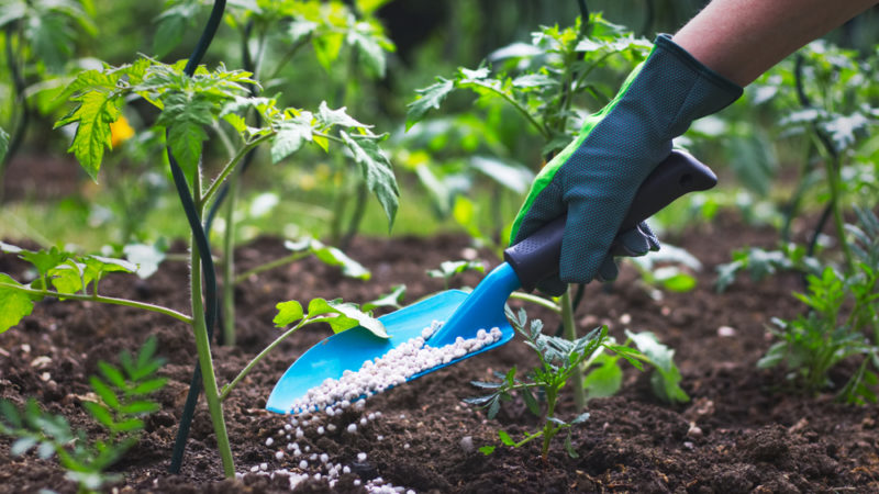 Could Green Fertilizer Transform Agriculture? Giving Compass