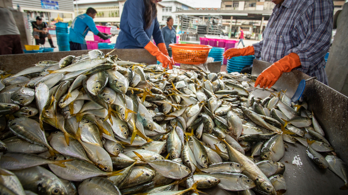 Why the Free Market Can't Fix Overfishing