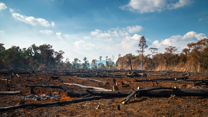 After the Amazon Fires, What's Next for Stopping Deforestation?