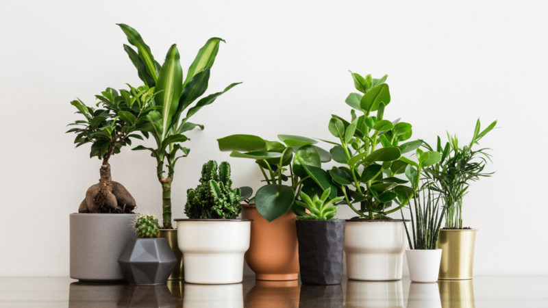 Doctors Prescribe Houseplants To Help Treat Anxiety And Depression Giving Compass