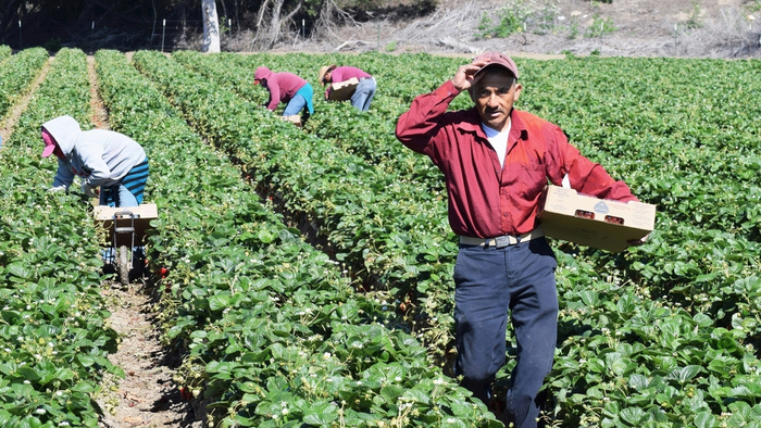 A New Pathway to Citizenship for Undocumented Farmworkers