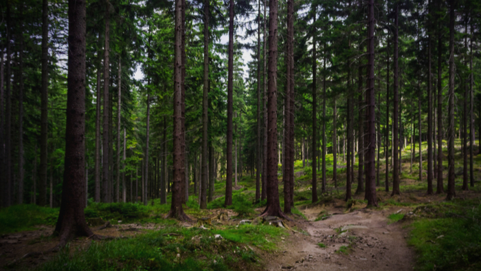 How Sustainable Forests Are Working to Combat Climate Change Giving Compass