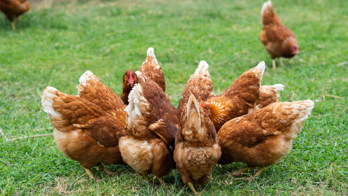Turning Food Waste Into Animal Feed