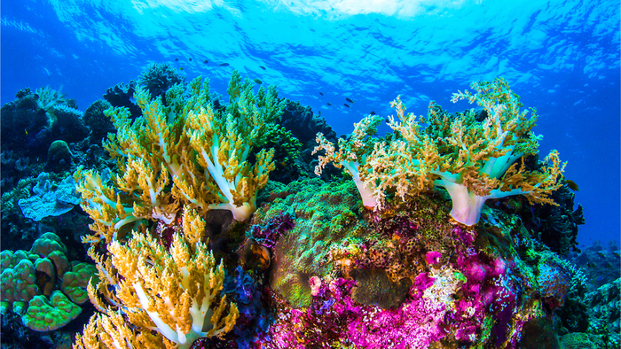 Heat-Resistant Corals Save The Day For Reefs In Fiji