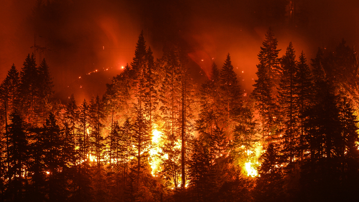 How Wildfires Have and Will Continue to Shape Our Future