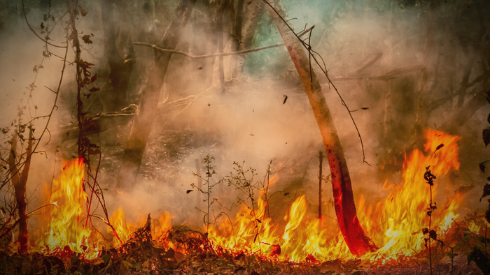 How Invasive Plants Play a Role in Sparking Wildfires Giving Compass