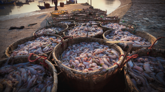 The Need For Transparency in Distant-water Fishing Operations Giving Compass
