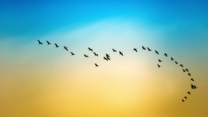 What Climate Changes Means for Migratory Birds