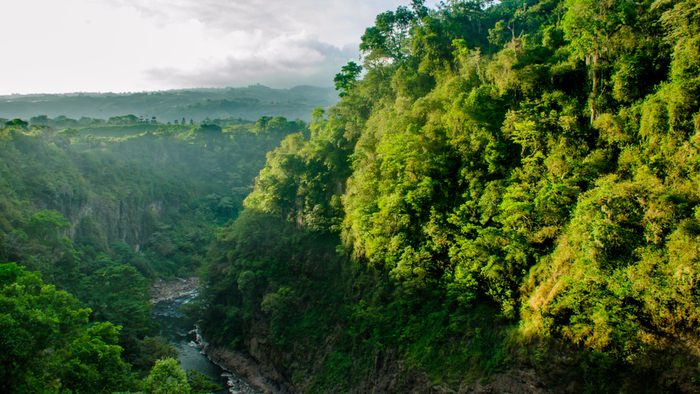 Regenerating Natural Capital in the Rainforests of Costa Rica