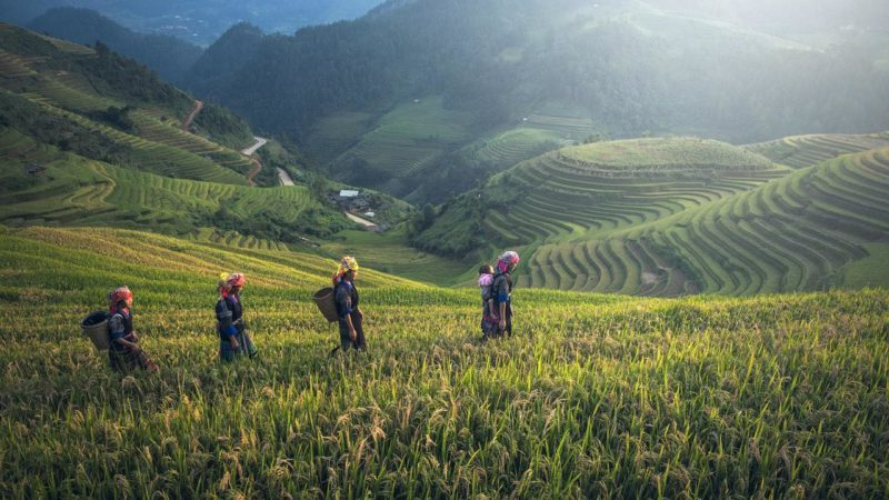 5 Ways Impact Investors Are Funding the UN SDGs in Asia Giving Compass