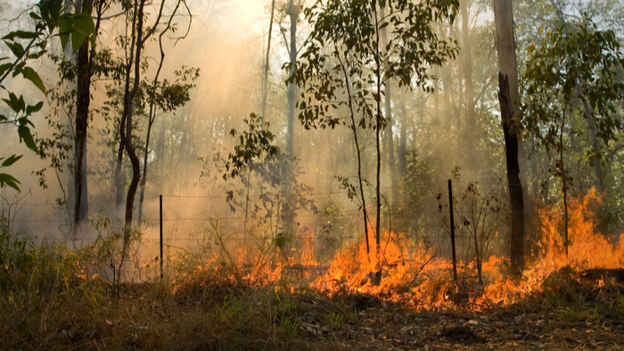 Climate Change and the Australia Fires