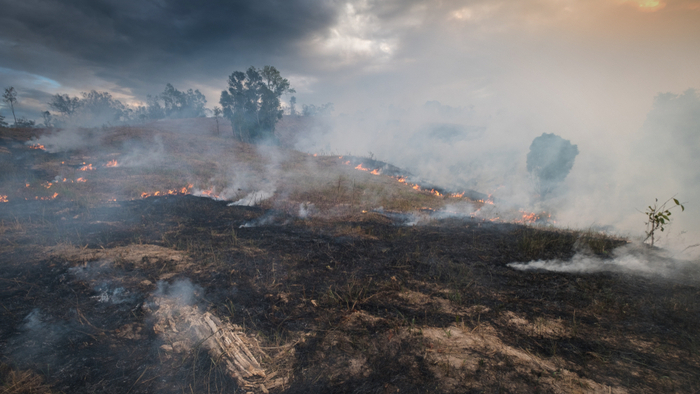 Effective Giving Strategies for Australia Wildfires
