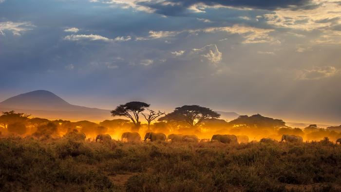 African Conservation Entrepreneurs Help Address the Biodiversity Crisis