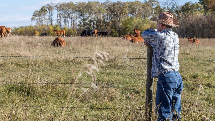 Cattle Ranchers Are Grazing National Parkland