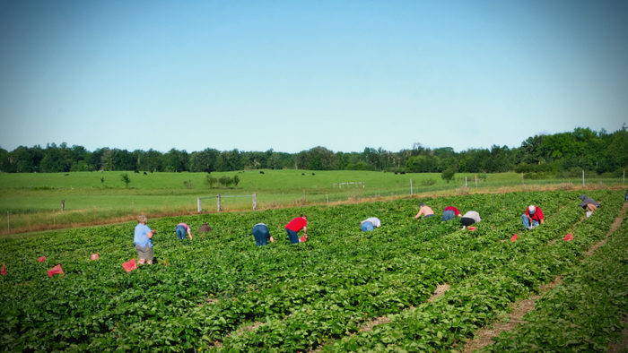 The Impact of COVID-19 on Seasonal Farmworkers Giving Compass