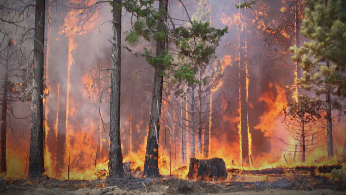Wildfires in the Pacific Northwest May Increase Due to Climate Change Giving Compass