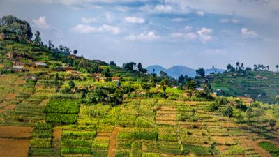 Peer-Driven Change in Rwanda
