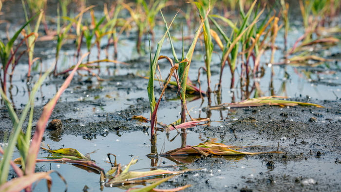 Climate Change Threatens Global Food Security Giving Compass