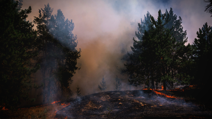 Firefighters Increase Risk of Getting COVID-19 From Exposure to Wildfire Smoke Giving Compass