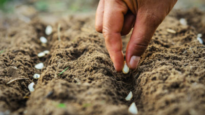 Seeding a Better, More Equitable Normal