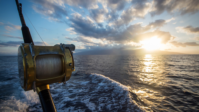 New Study Reveals the Impact of Fishing on Carbon Emissions Giving Compass