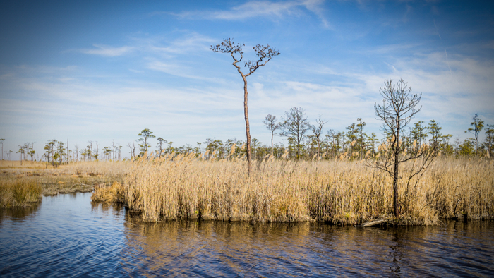 How Rising Sea Levels Caused By Climate Change Are Killing Forests Giving Compass